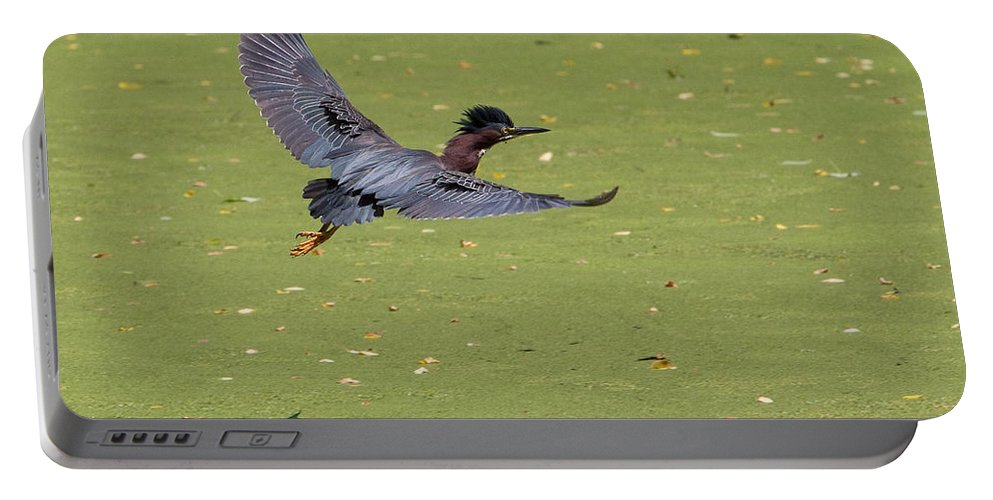 Green Heron Portable Battery Charger featuring the photograph Green Heron In Flight by Stephanie McDowell