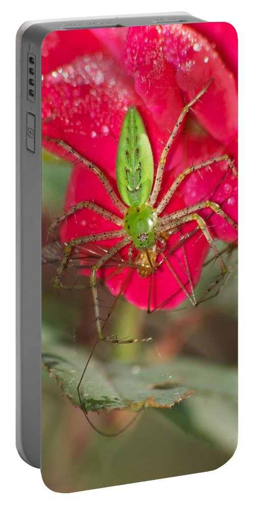 America Portable Battery Charger featuring the photograph Green Lynx And Pray 8625 3375 by Michael Peychich