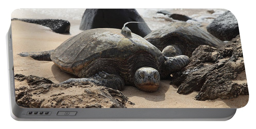 Green Sea Turtle Portable Battery Charger featuring the photograph Green Sea Turtle With Gps by Ted Kinsman