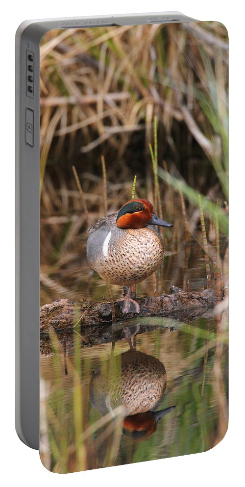Doug Lloyd Portable Battery Charger featuring the photograph Greenwing Teal by Doug Lloyd