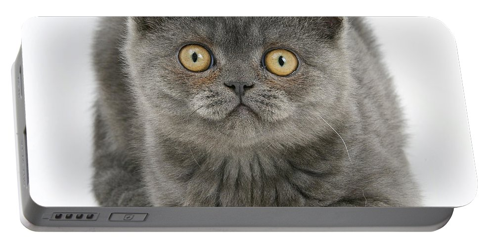 Animal Portable Battery Charger featuring the photograph Grey Kitten by Mark Taylor