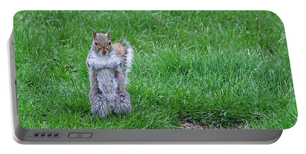 Squirrel Portable Battery Charger featuring the photograph Grey Squirrel In The Rain II by Jeff Galbraith