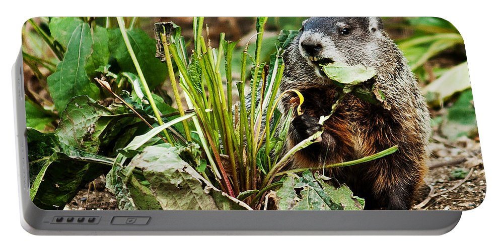 Ground Hog Portable Battery Charger featuring the photograph Ground Hog Lunch by Edward Peterson