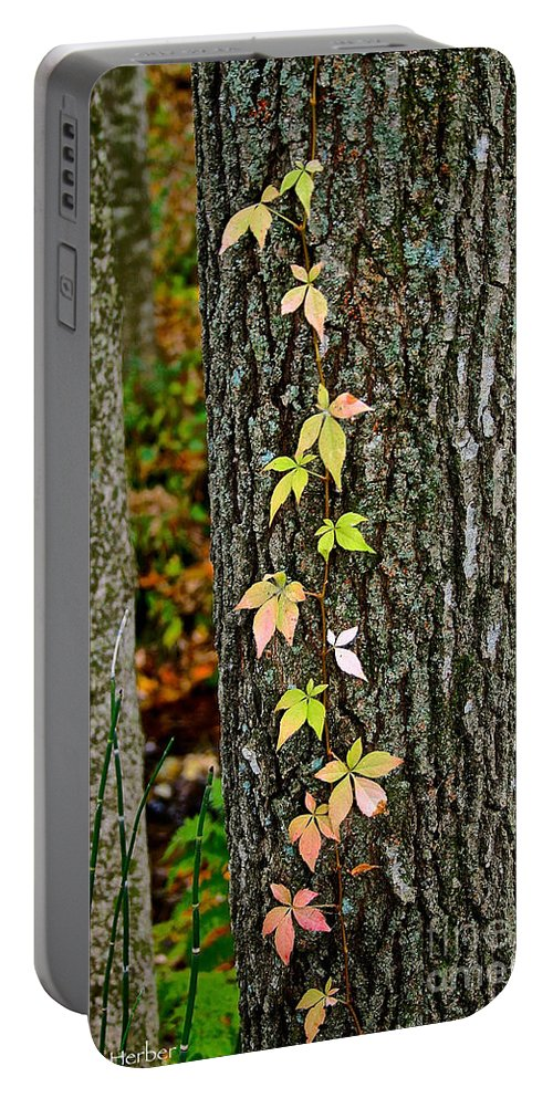 Landscape Portable Battery Charger featuring the photograph Growing Up by Susan Herber