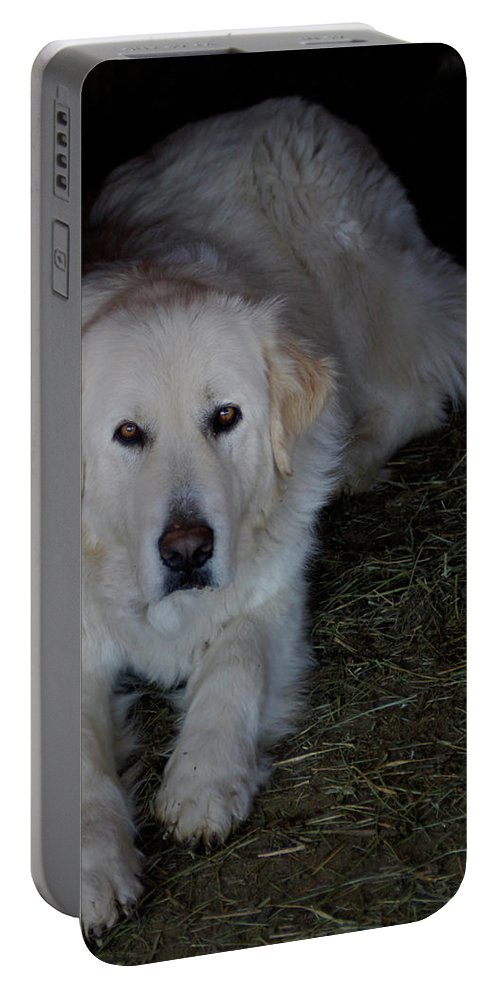 Dog Portable Battery Charger featuring the photograph Guarding The Barn by Charles and Melisa Morrison