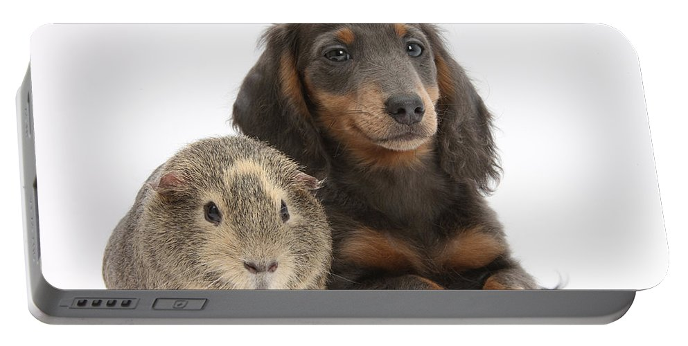Nature Portable Battery Charger featuring the photograph Guinea Pig And Blue-and-tan Dachshund by Mark Taylor