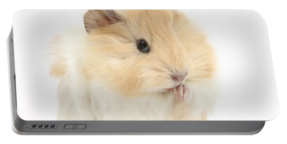 Animal Portable Battery Charger featuring the photograph Guinea Pig Washing Paw by Mark Taylor