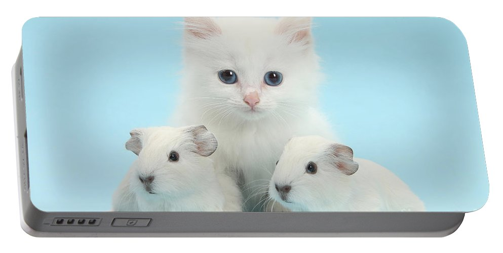 Nature Portable Battery Charger featuring the photograph Guinea Pigs And Maine Coon-cross Kitten by Mark Taylor
