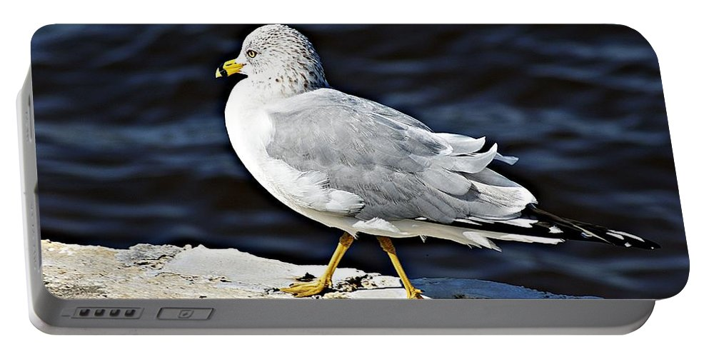 Gull Portable Battery Charger featuring the photograph Gull 2 by Joe Faherty