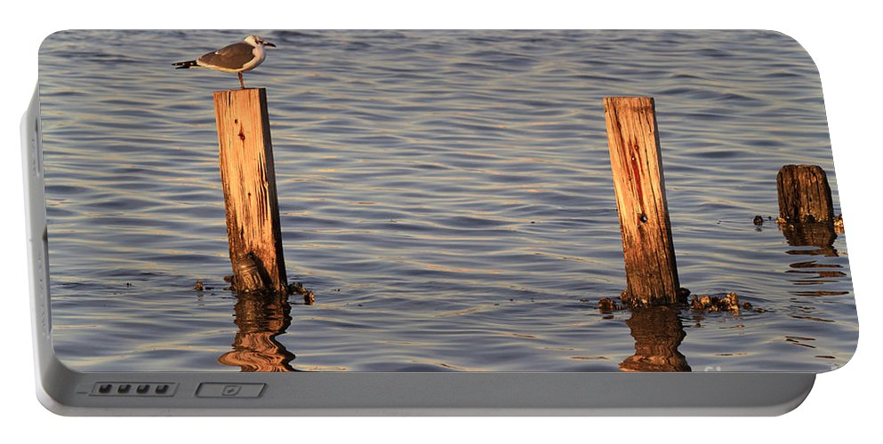 Gull Portable Battery Charger featuring the photograph Gull At Sunset by Louise Heusinkveld