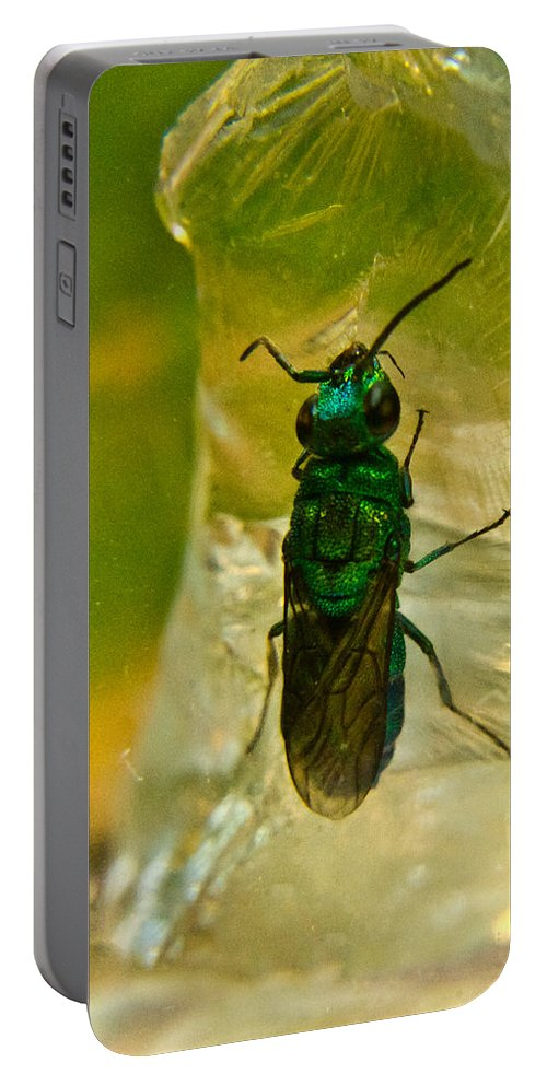Wasp Portable Battery Charger featuring the photograph Halicid Wasp 3 by Douglas Barnett