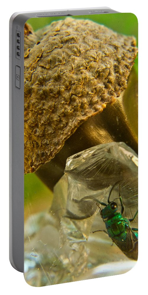 Wasp Portable Battery Charger featuring the photograph Halicid Wasp 5 by Douglas Barnett