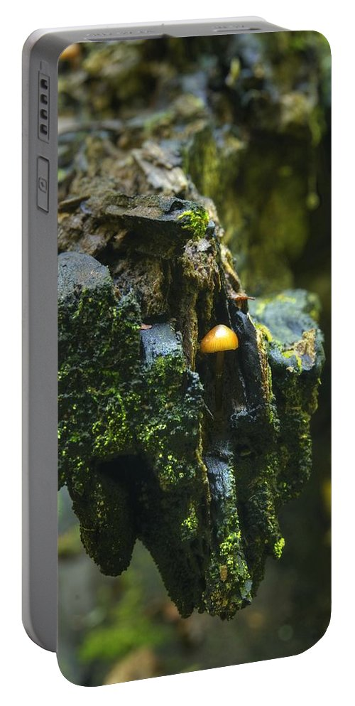 Mushroom Portable Battery Charger featuring the photograph Hanging In There by Michael Peychich