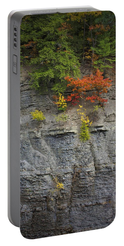 Trees Portable Battery Charger featuring the photograph Hanging On by Rick Berk