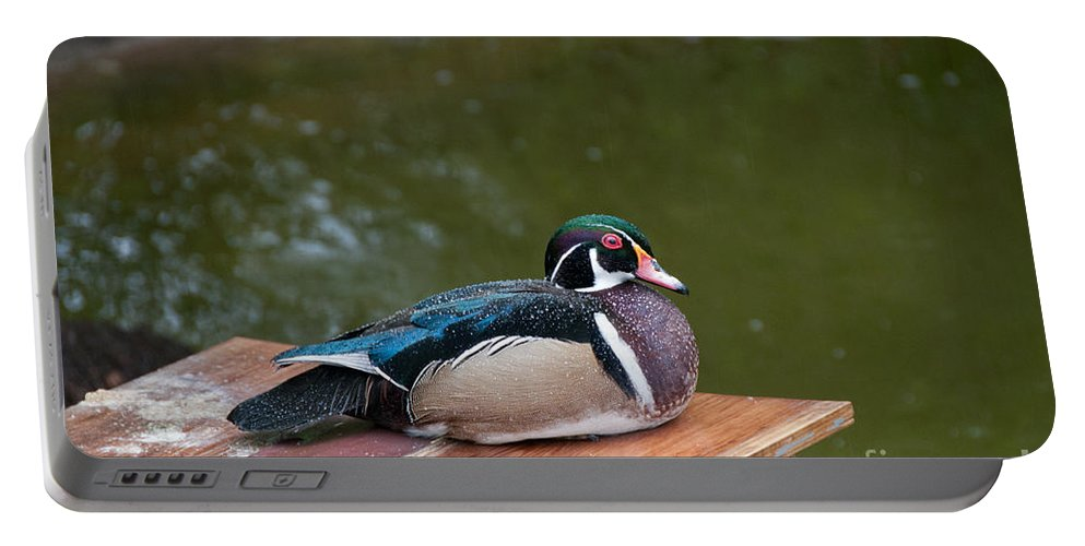 Animals Portable Battery Charger featuring the digital art Harlequin Duck by Carol Ailles