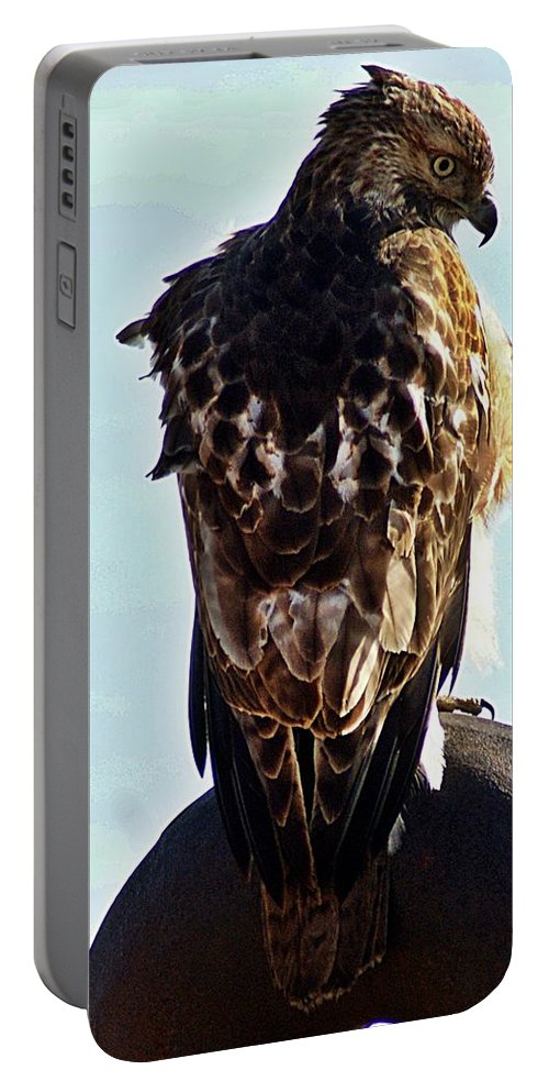 Hawk Portable Battery Charger featuring the photograph Hawk 3 by Joe Faherty