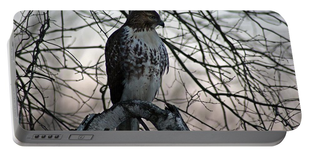 Hawk Portable Battery Charger featuring the photograph Hawk 6 by Joe Faherty