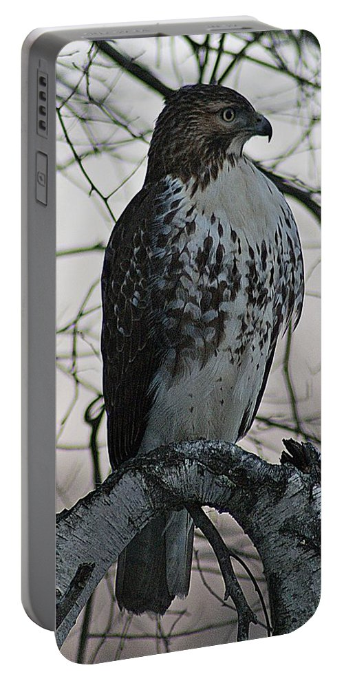 Hawk Portable Battery Charger featuring the photograph Hawk 7 by Joe Faherty