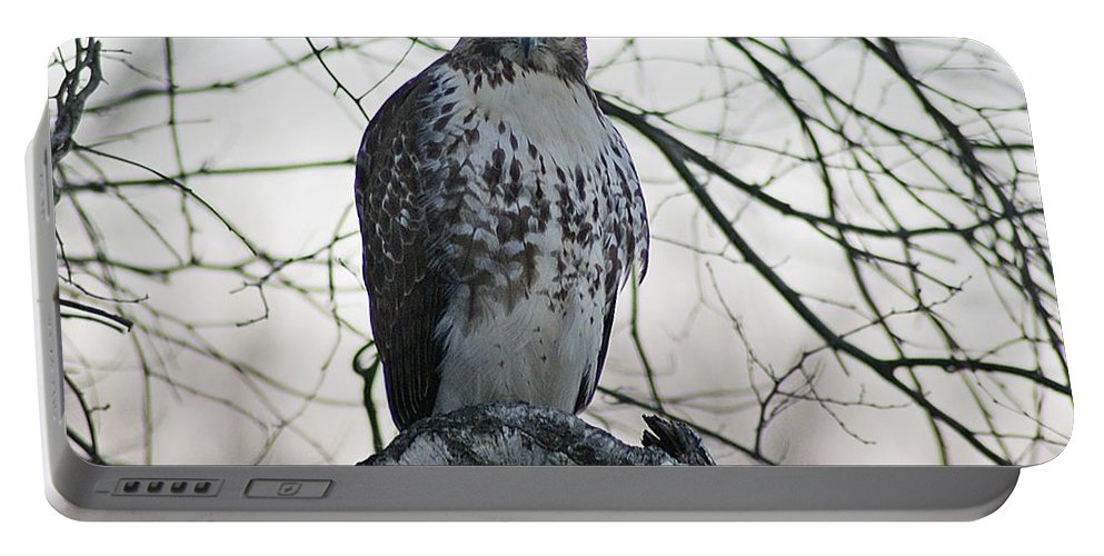 Hawk Portable Battery Charger featuring the photograph Hawk 9 by Joe Faherty