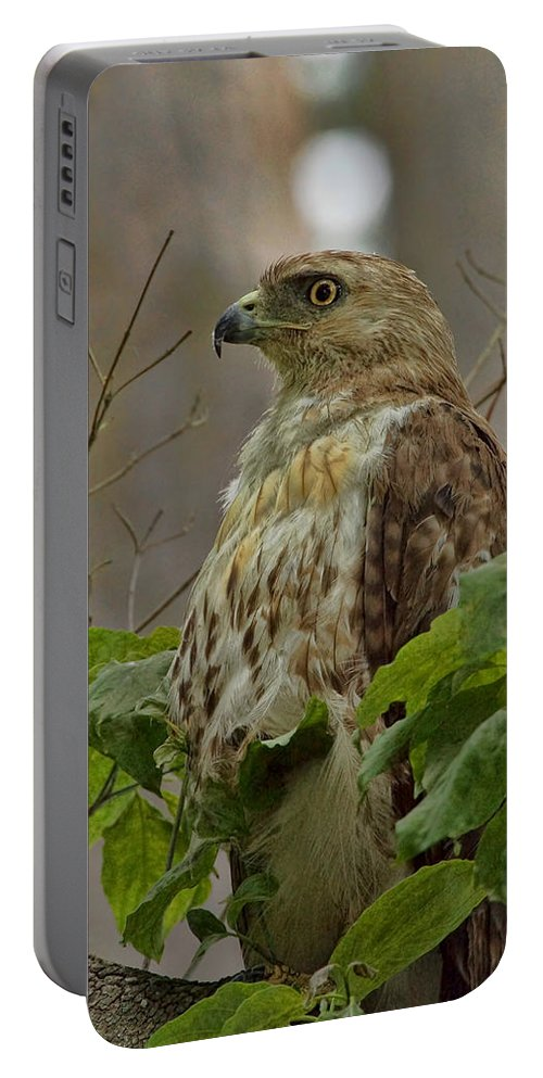Hawk Portable Battery Charger featuring the photograph Hawk by Alan Hutchins