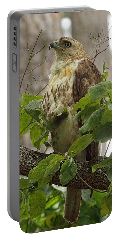 Watch Portable Battery Charger featuring the photograph Hawk On Watch by Alan Hutchins