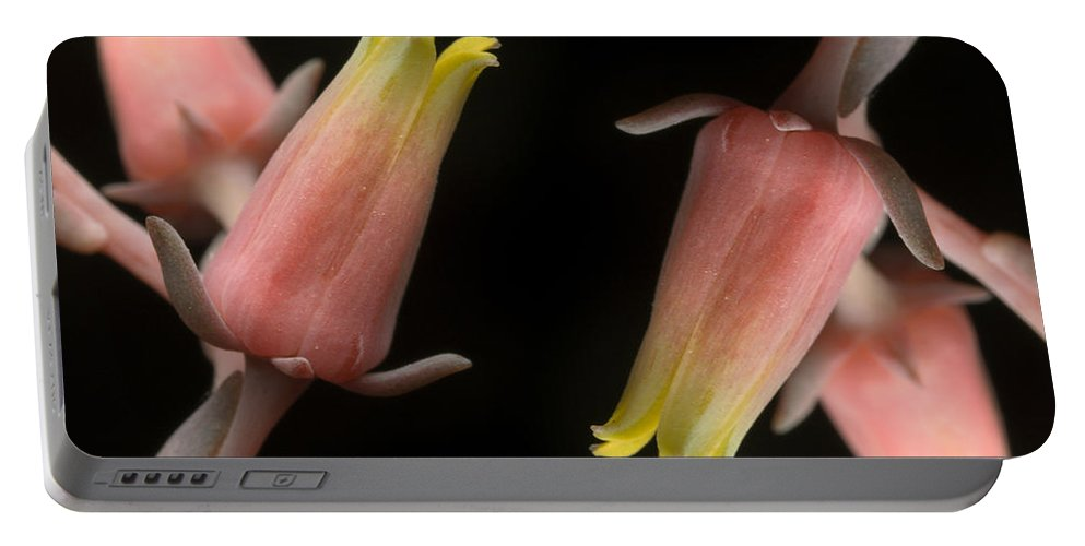 Flora Portable Battery Charger featuring the photograph Hen And Chicks by Raul Gonzalez Perez