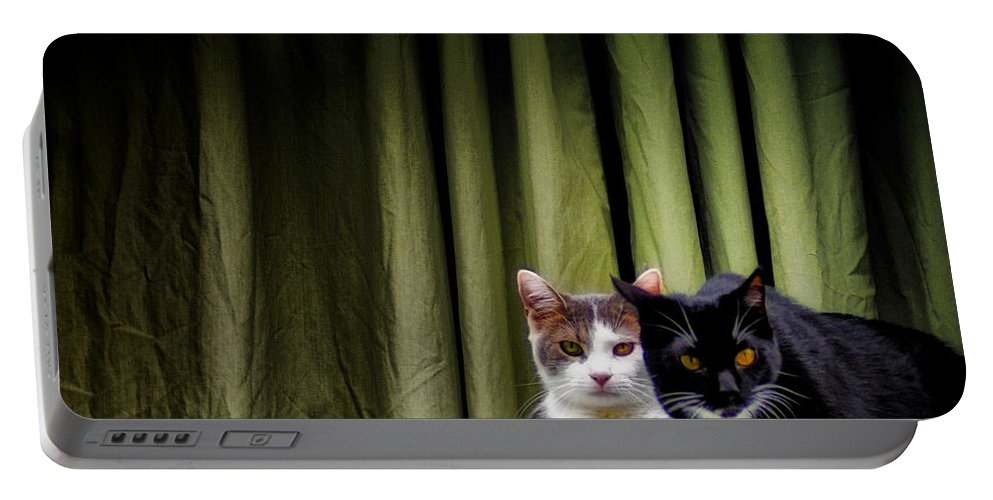 Cat Portable Battery Charger featuring the photograph Here Kitty Kitty by Bill Cannon