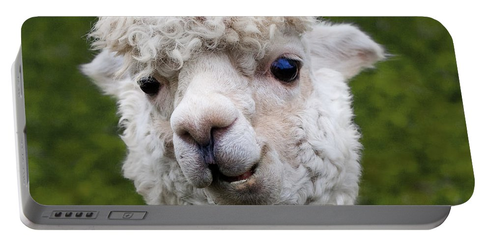 Animals Portable Battery Charger featuring the photograph Here's Lookin' At You Kid by Barbara McMahon