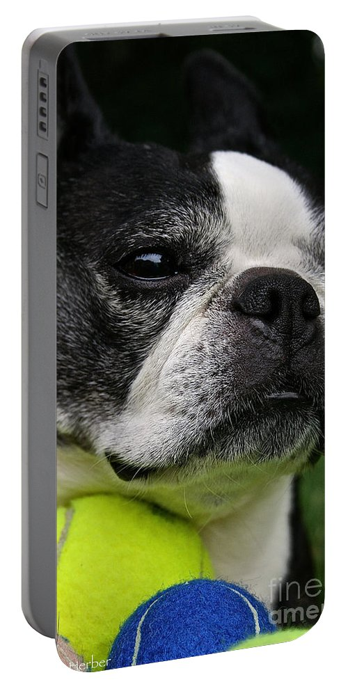 Mammal Portable Battery Charger featuring the photograph Hoarder by Susan Herber