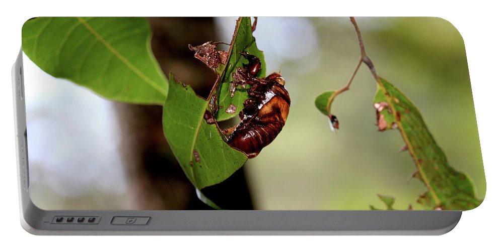 Bugs Portable Battery Charger featuring the photograph Hold On by Karen Elzinga