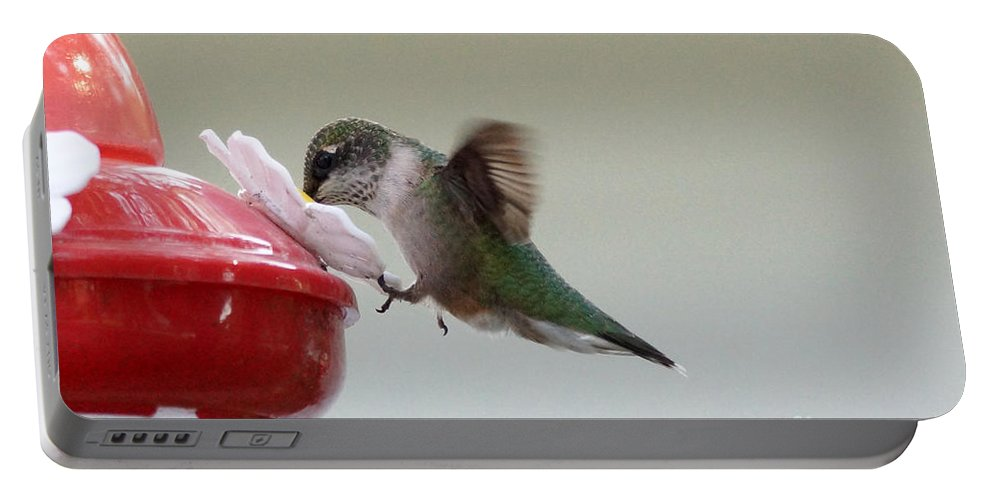 Hummingbird Portable Battery Charger featuring the photograph Holding On by Lori Tordsen