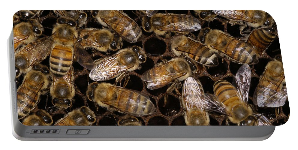 Bee Portable Battery Charger featuring the photograph Honey Bees by Raul Gonzalez Perez