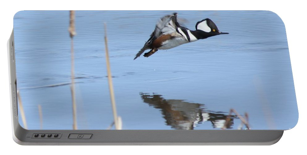 Hodded Portable Battery Charger featuring the photograph Hooded Merganser Flying by Lori Tordsen