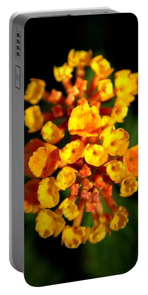 Flower Portable Battery Charger featuring the photograph Horn Section by David Weeks