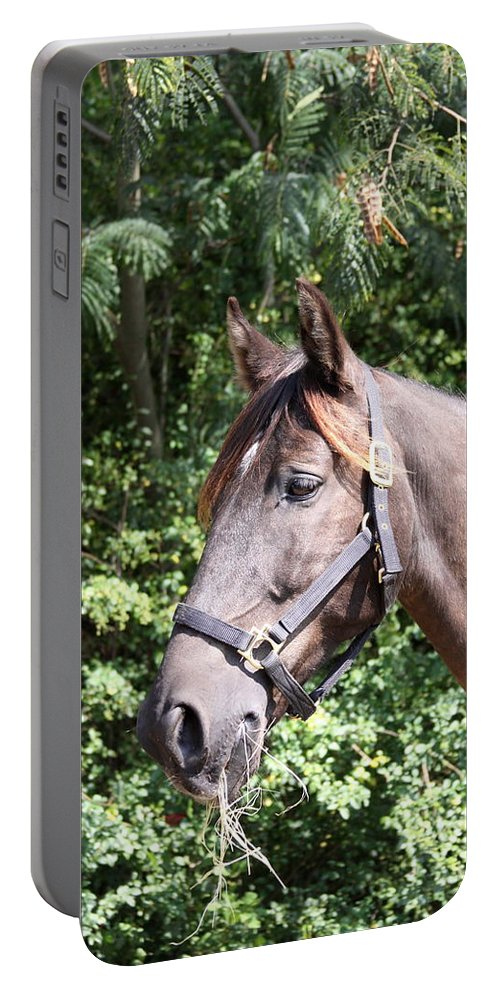 Horse Portable Battery Charger featuring the photograph Horse At Mule Day In Benson by Travis Truelove