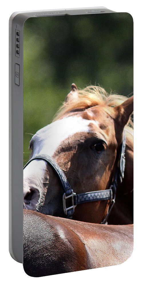 Mule Day Portable Battery Charger featuring the photograph Horse At Mule Days 2012 - Benson by Travis Truelove