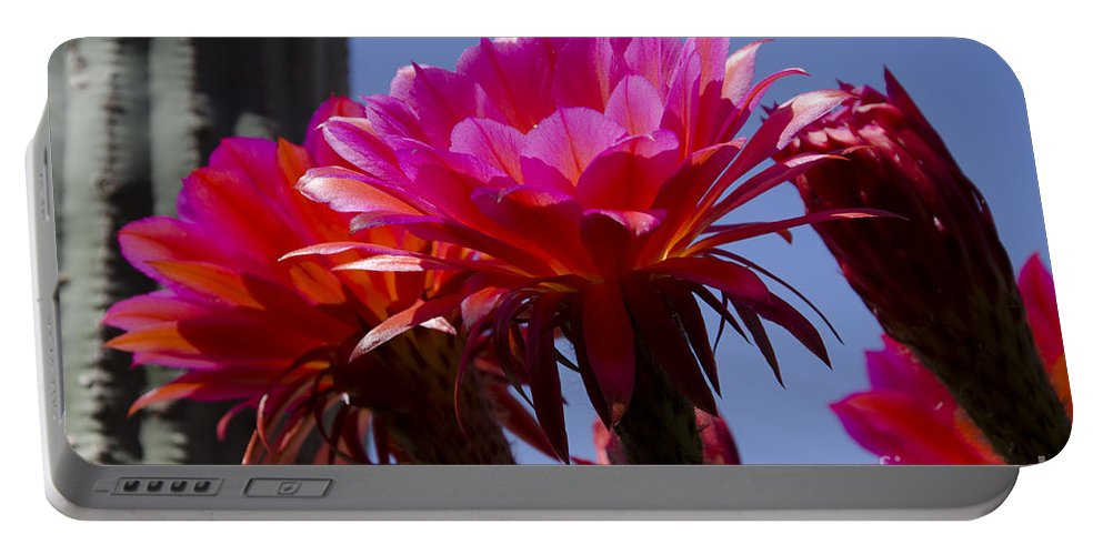 Red Portable Battery Charger featuring the photograph Hot Pink Cactus Flowers by Jim And Emily Bush