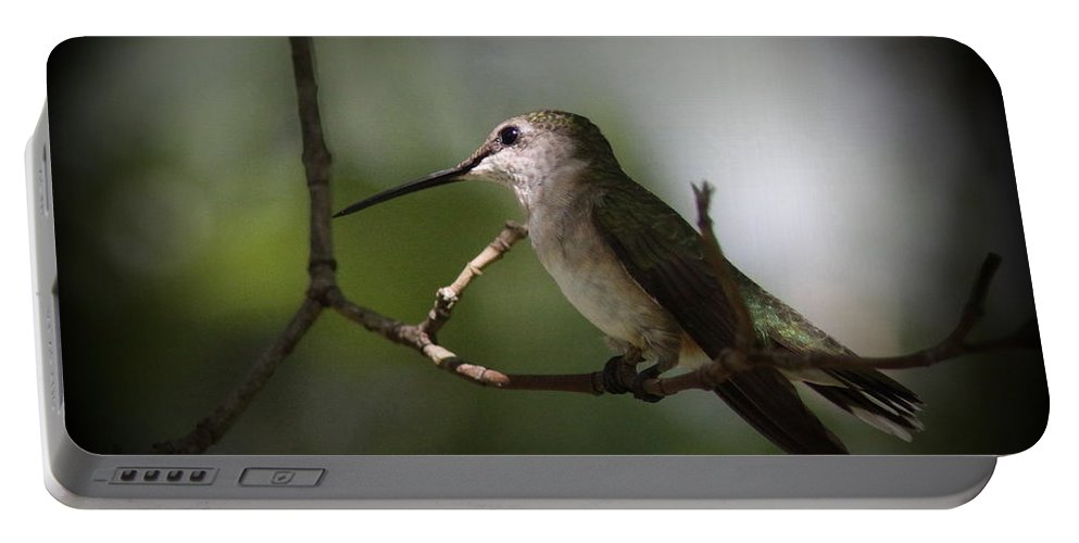Hummingbird Portable Battery Charger featuring the photograph Hummingbird - Under The Canopy by Travis Truelove