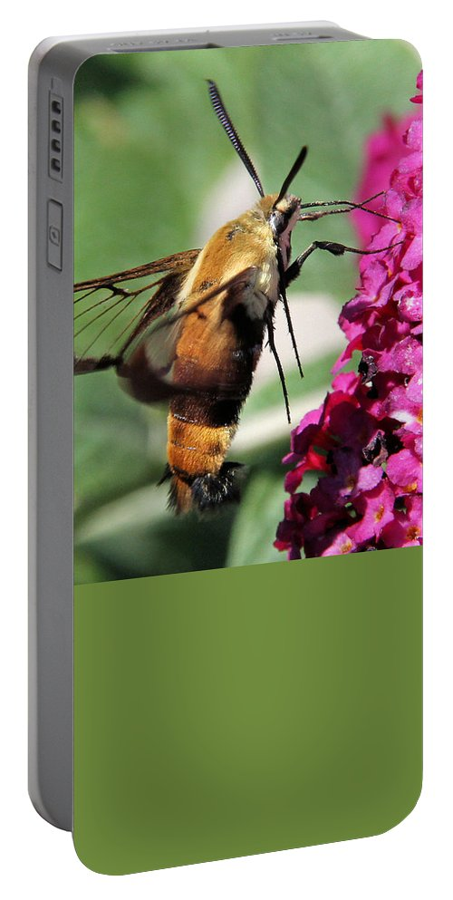 Hummingbird Clearwing Moth Portable Battery Charger featuring the photograph Hummingbird Clearwing Moth by Doris Potter