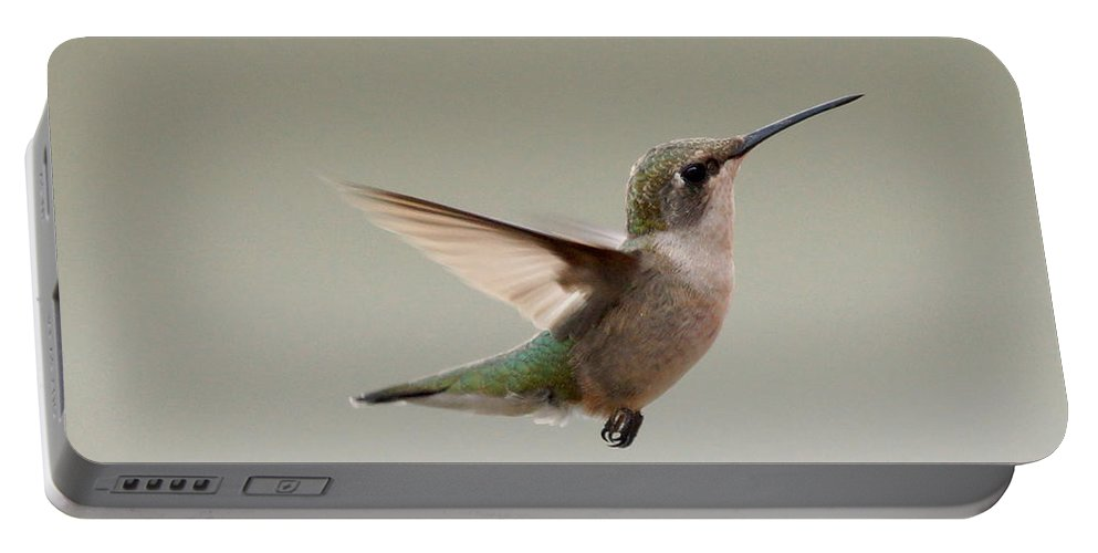 Birds Portable Battery Charger featuring the photograph Hummingbird In Flight by Lori Tordsen
