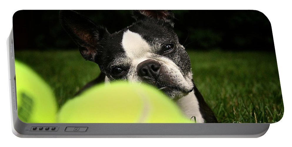 Mammal Portable Battery Charger featuring the photograph Hypnosis by Susan Herber