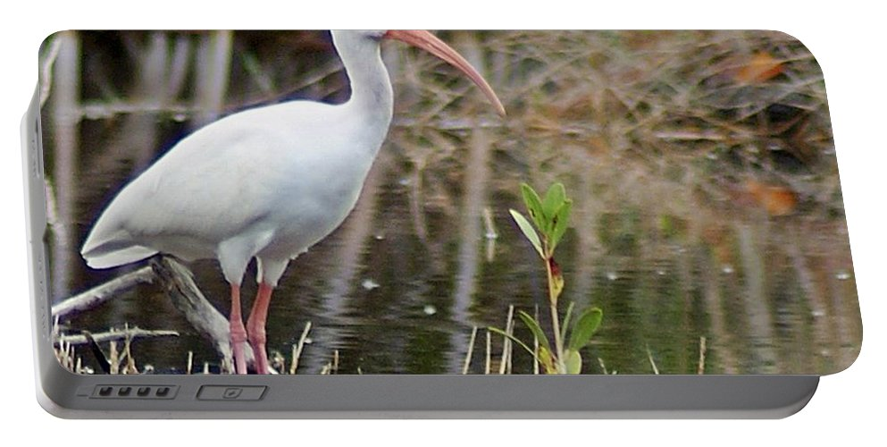 Ibis Portable Battery Charger featuring the photograph Ibis 1 by Joe Faherty