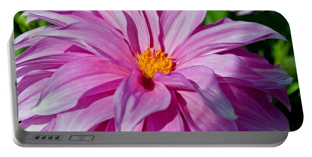 Ice Pink Portable Battery Charger featuring the photograph Ice Pink Dahlia by Tikvah's Hope