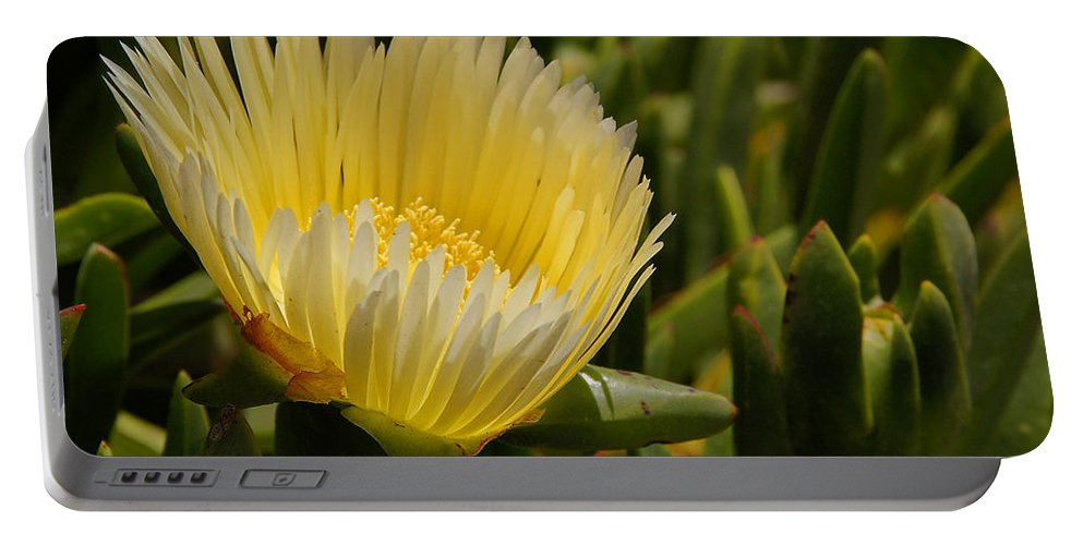 Central Coast Portable Battery Charger featuring the photograph Ice Plant Bloom by Mick Anderson