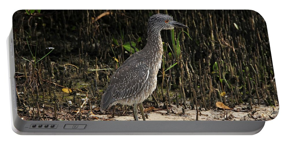 Bird Portable Battery Charger featuring the photograph Immature Blacked Crowned Night Heron by David Lee Thompson