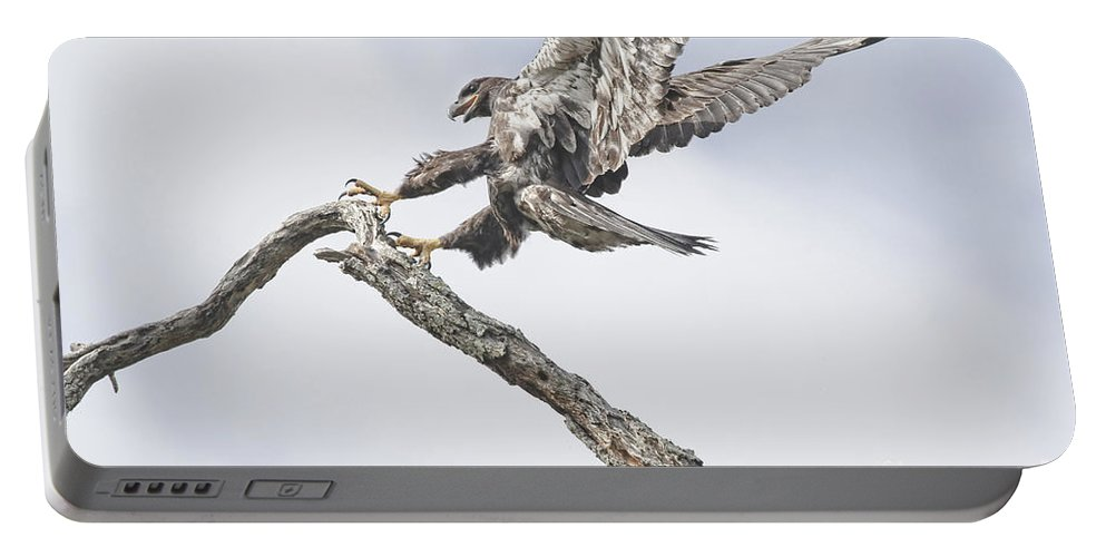 Eagle Portable Battery Charger featuring the photograph Immature Eagle At Play by Deborah Benoit