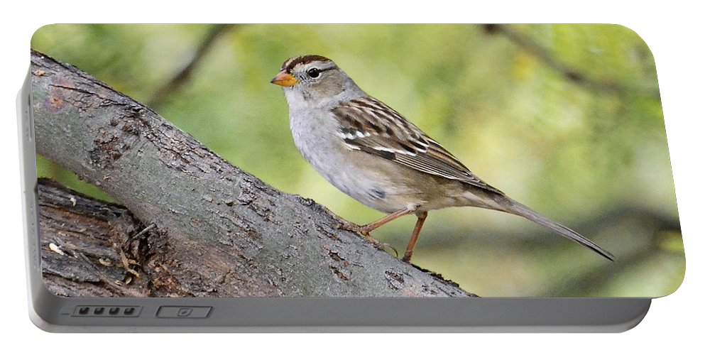 White-crowned Sparrow Portable Battery Charger featuring the photograph Immature White-crowned Sparrow by Saija Lehtonen