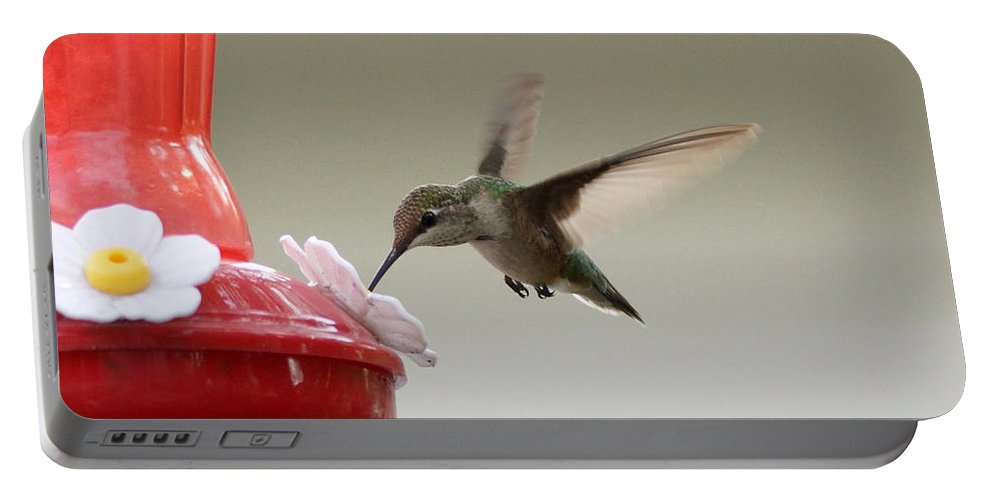 Hummingbird Portable Battery Charger featuring the photograph In Flight Dinner by Lori Tordsen