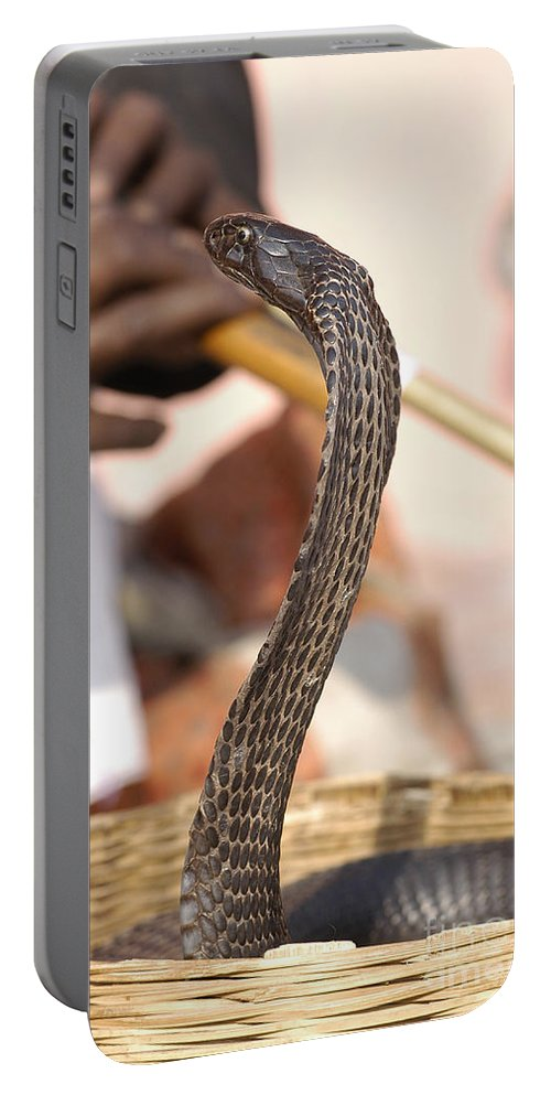 Reptilia Portable Battery Charger featuring the photograph Indian Cobra by Raul Gonzalez Perez