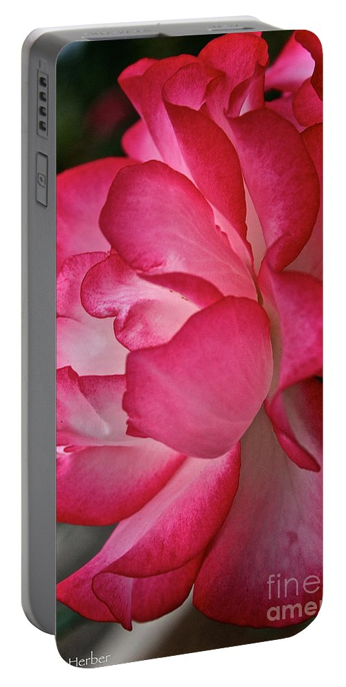 Floral Portable Battery Charger featuring the photograph Inner Glow by Susan Herber